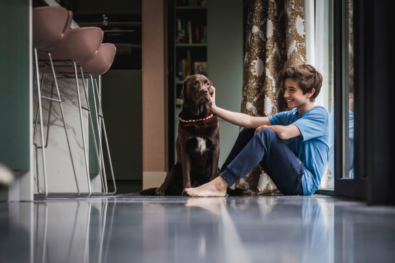 stock dutch interior design dog and boy