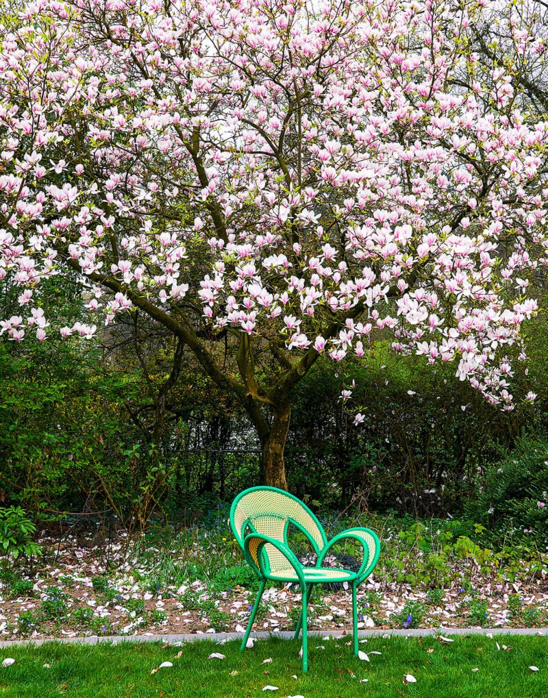 pink flowers tree blossom green chair